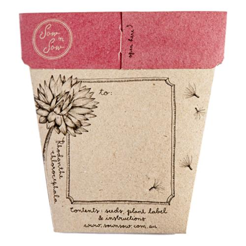 Sow 'N Sow – Gift of Seeds Everlasting Daisy